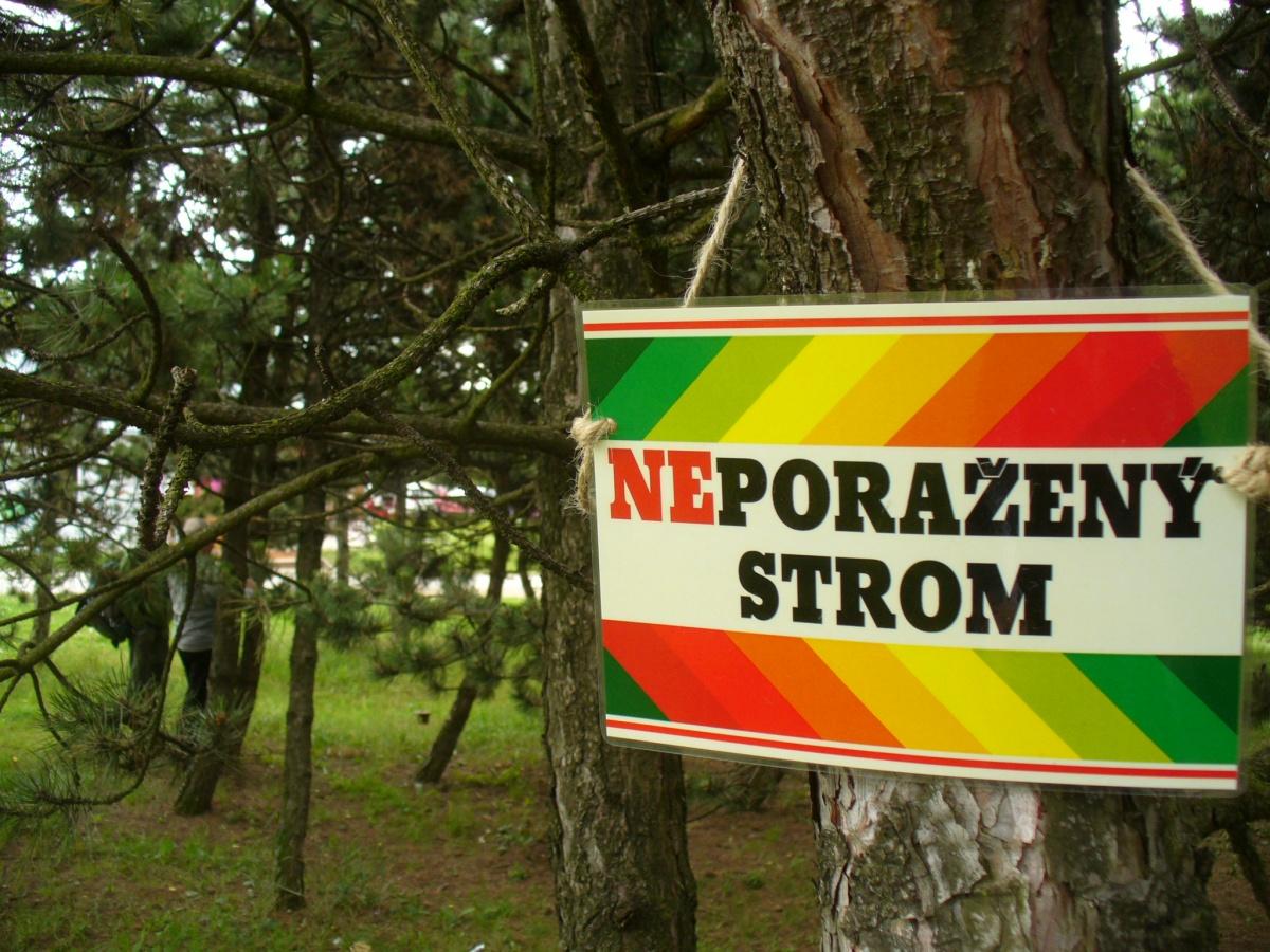 Pokácenými stromy se bude zabývat soud, ministerstvo i inspekce
