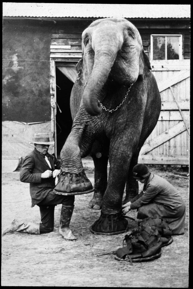 Za cirkusy bez zvířat